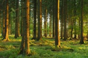 Coilte Forestry