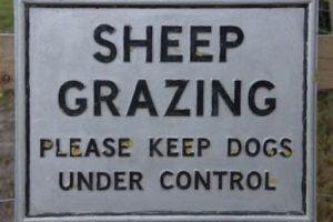 Sheep Grazing Sign